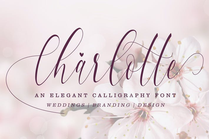 Thumbnail for Charlotte Calligraphy