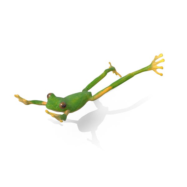 Thumbnail for Tree Frog