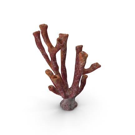 Coral Tube