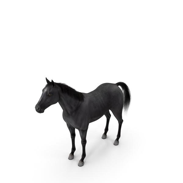 Black Horse Fur