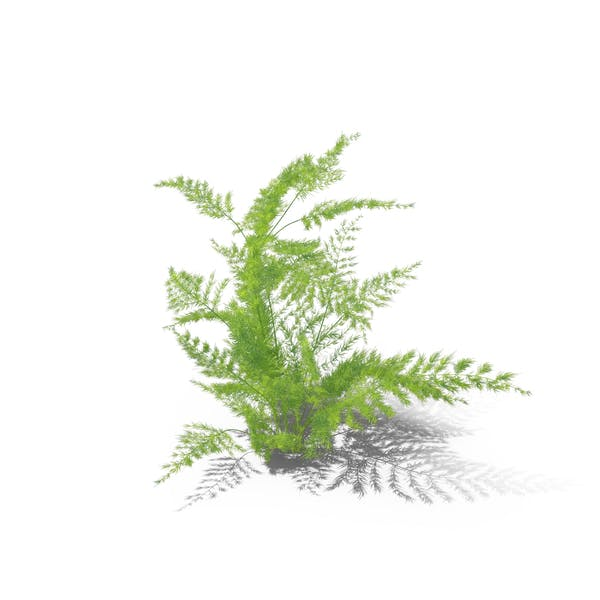 Cover Image for Fern