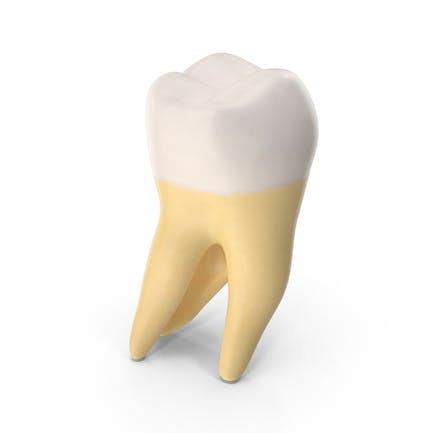 Segundo molar mandíbula superior derecha limpia