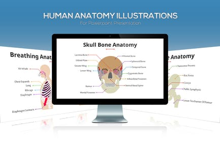 Biology - Human Anatomy For Powerpoint