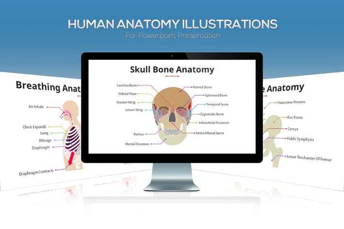 Thumbnail for Biology - Human Anatomy For Powerpoint