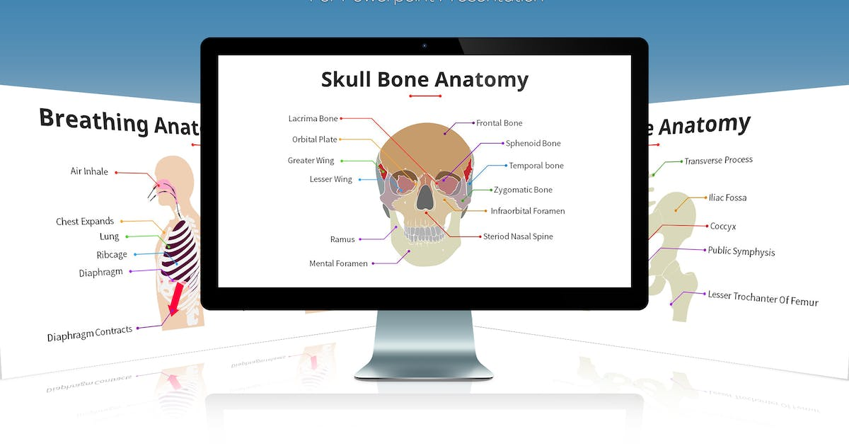 Download Biology - Human Anatomy For Powerpoint by SlideFactory