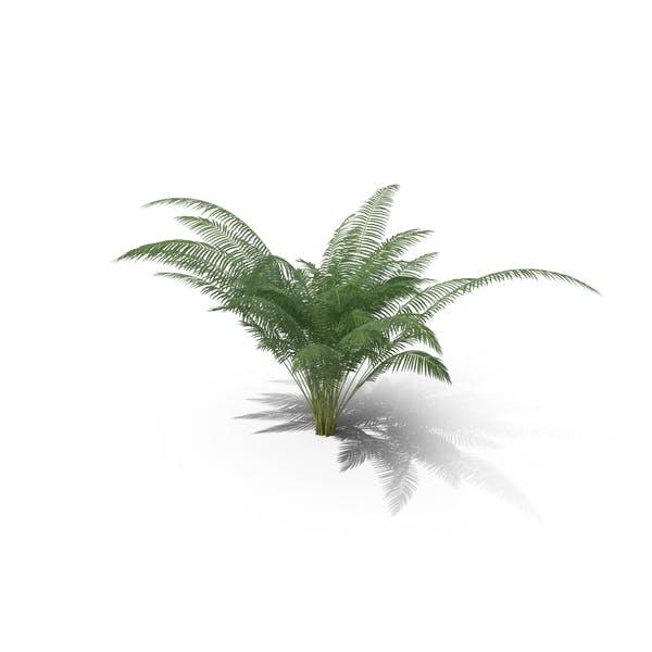 Thumbnail for Areca Palm Small