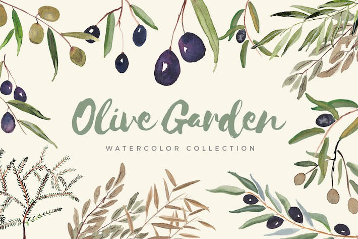 Thumbnail for Olive Garden Watercolor Collection