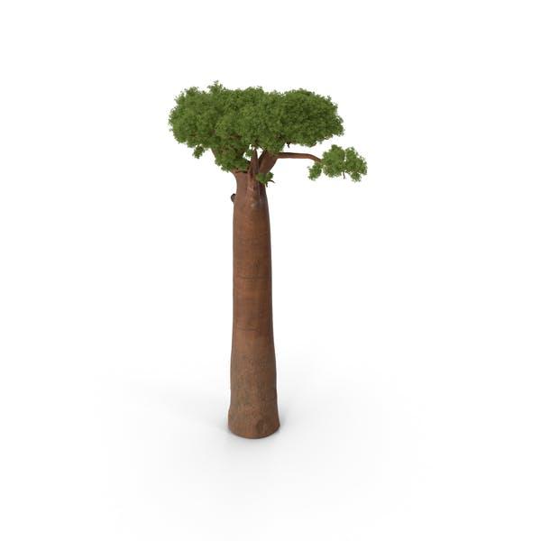Thumbnail for Baobab Tree