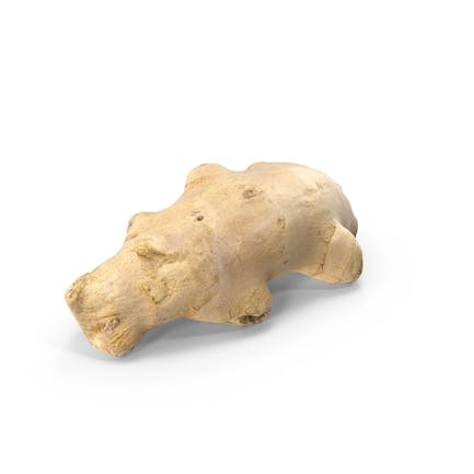 Ginger Root 08