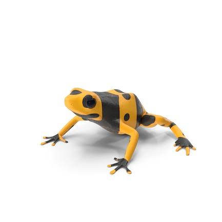 Yellow and Black Dart Frog