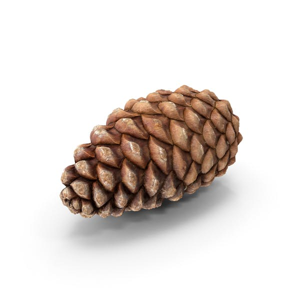 Thumbnail for Closed Pine Cone Flat