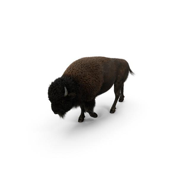 Thumbnail for Американский бизон