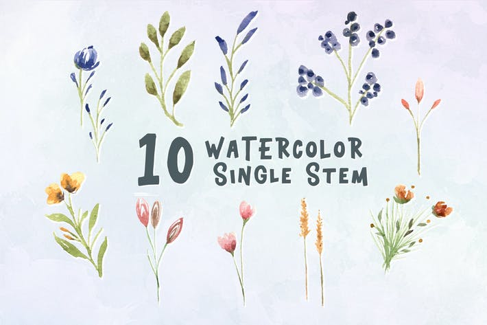 Cover Image For 10 Watercolor Single Stem Illustration Graphics