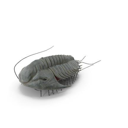 Artrópodo Aracnomorfo Marino Extinto Trilobite