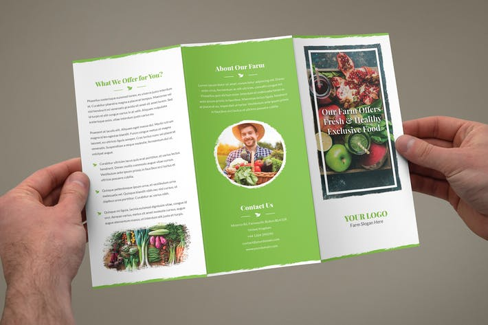 Thumbnail for Brochure – Organic Food Tri-Fold