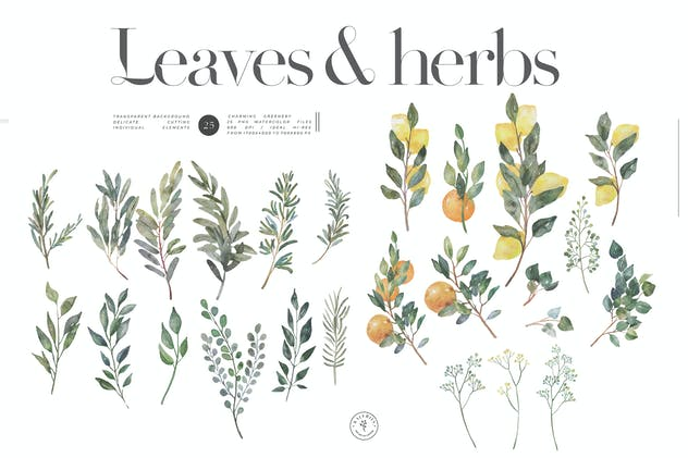 Herbs and leaves - watercolor summer kit