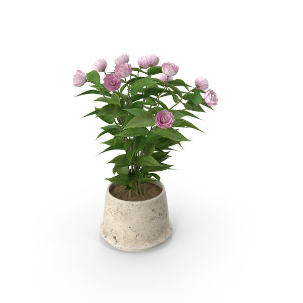 Thumbnail for Potted Flower