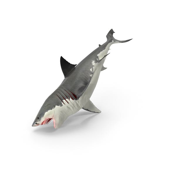 Thumbnail for Great White Shark