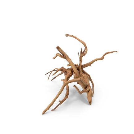 Tree Root Wood