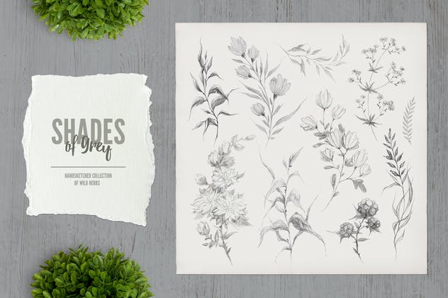 Shades of Grey. Collection of wild herbs // 2