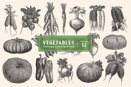 Vintage Vegetable Illustrations Vol. 12