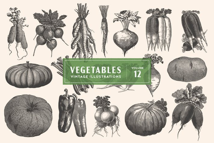 Thumbnail for Vintage Vegetable Illustrations Vol. 12