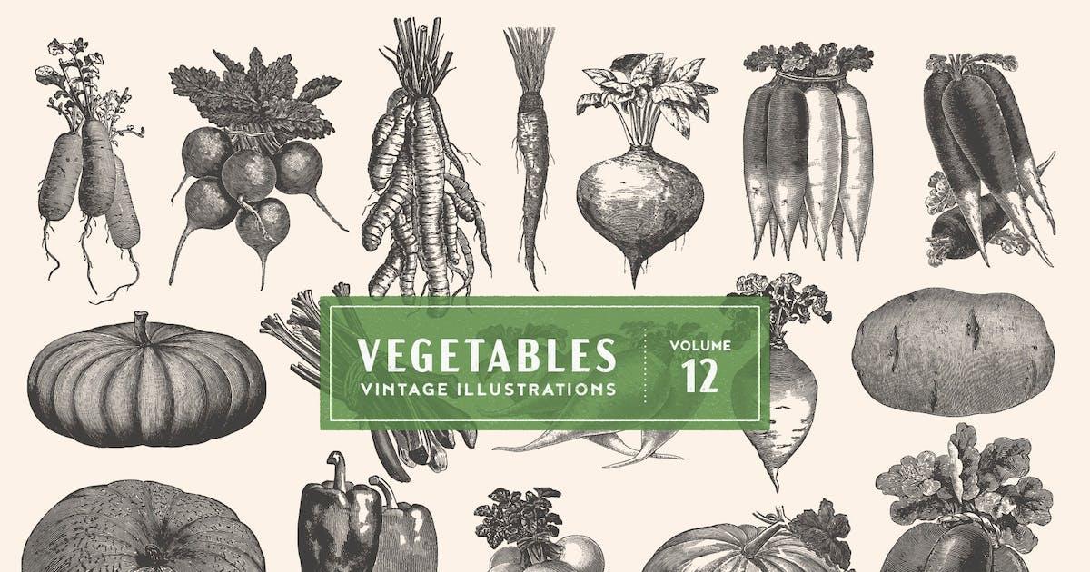 Download Vintage Vegetable Illustrations Vol. 12 by GraphicGoods