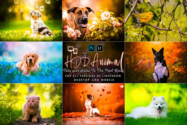 Thumbnail for PRO HDR Animal Lightroom Presets
