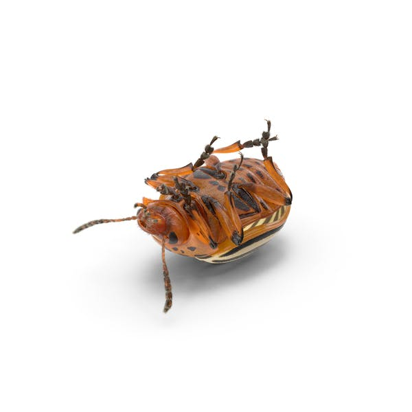 Thumbnail for Colorado Potato Beetle