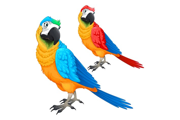 Parrots in Two Different Colors