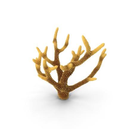 Koralle Orange