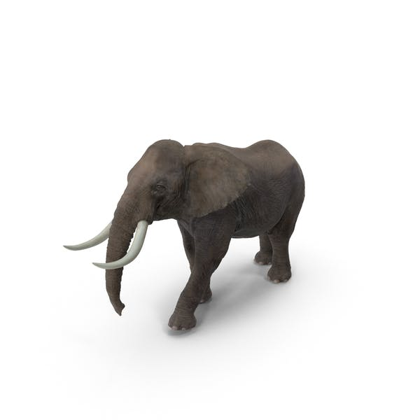 Thumbnail for Слон