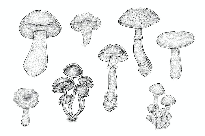 Thumbnail for Mushrooms Set (Vector)