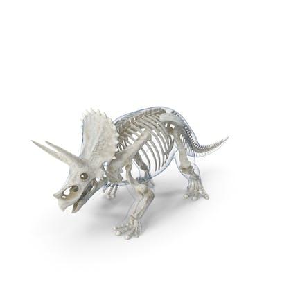 Triceratops - Pose de esqueleto para caminar con piel transparente