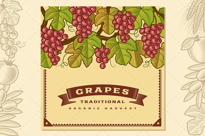 Thumbnail for Retro Grapes Harvest Card