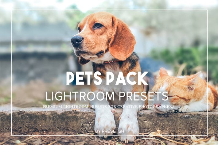 Thumbnail for Pet Photography Lightroom Presets