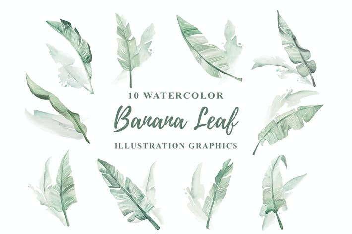 Thumbnail for 10 Watercolor Banana Leaf Illustration Graphics