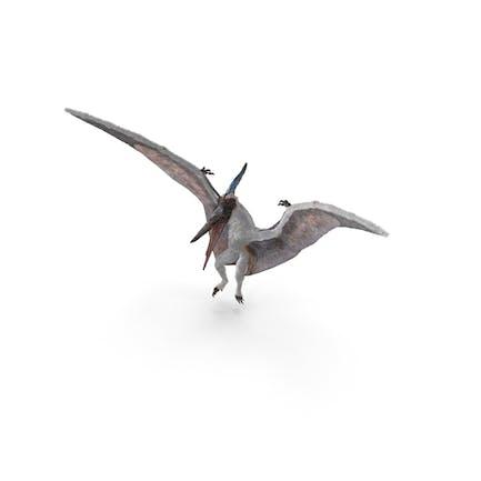 Pterosaur Pteranodon White Landing Pose mit Fell