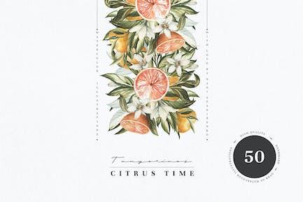 Citrus Time.Mandarin