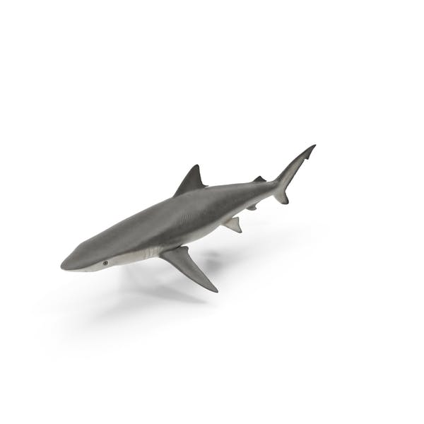 Cover Image for Smalltail Shark