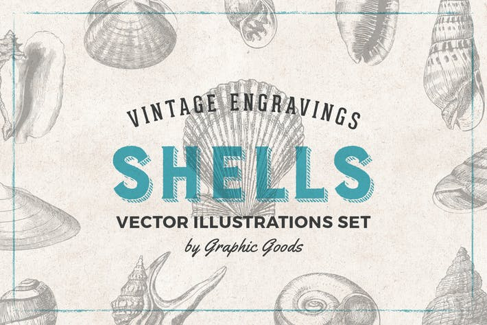 Thumbnail for Shells - Vintage Engraving Illustration Set