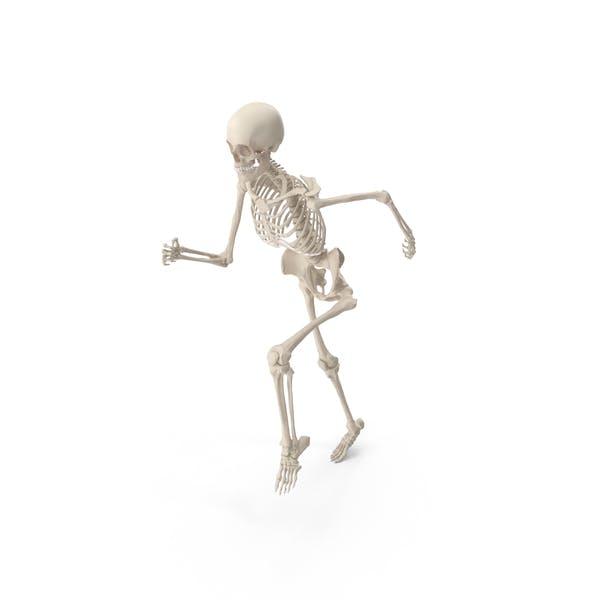 Скелет бег