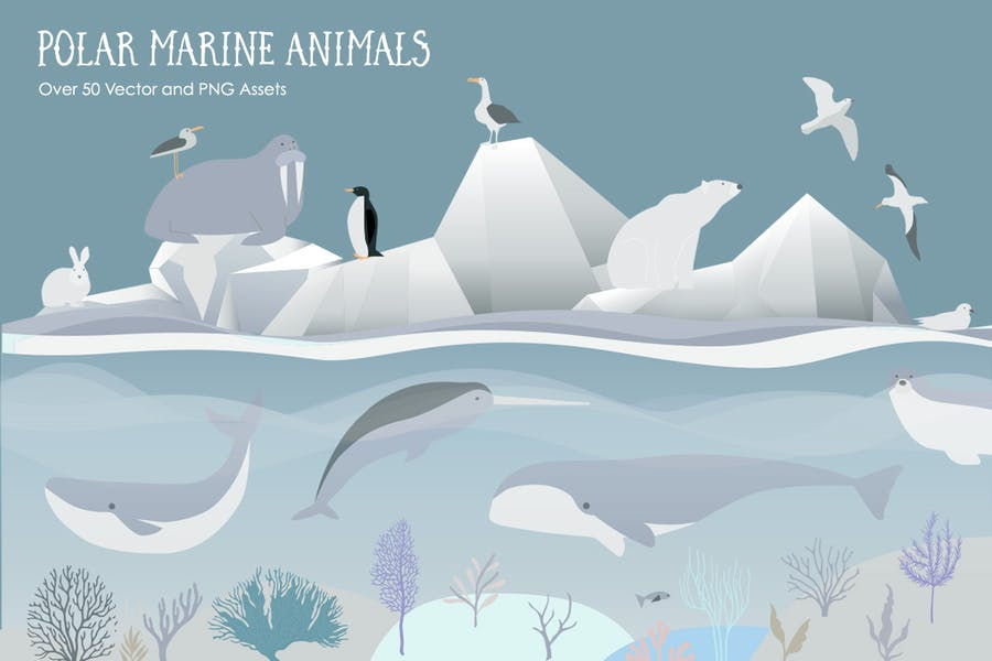 Polar Arctic Marine Ocean Animals