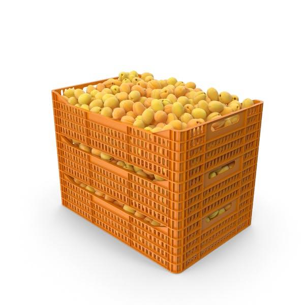 Aprikosen in Kunststoffkisten