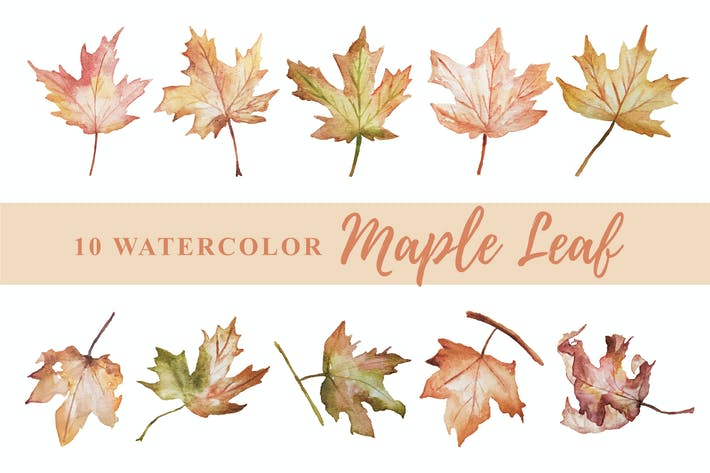 Thumbnail for 10 Watercolor Maple Leaf Illustration Graphics