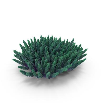 Сoral 08 verde