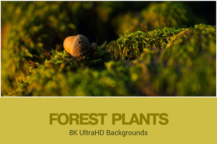 Thumbnail for 8K UltraHD Forest Plants Backgrounds Set