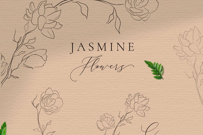 Jasmine Flowers Line Art Ornate Elements