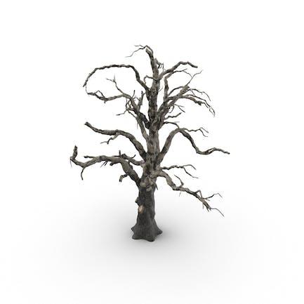 Alter toter Baum