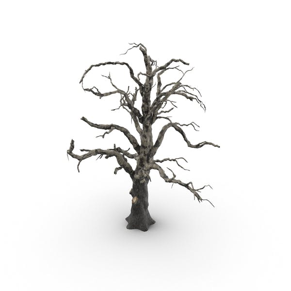 Thumbnail for Old Dead Tree